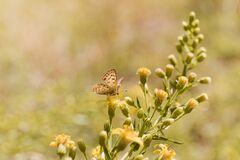 Simple garden butterfly on some flowers outside. Nature shot