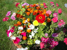 Simple garden flowers Royalty Free Stock Photography