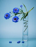 Simple glass vase with summer flowers on blue Royalty Free Stock Photos