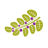 Simple green deciduous vector tree leaf with purple seeds, styli Royalty Free Stock Photography