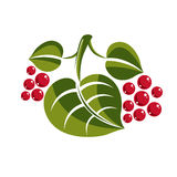 Simple green deciduous vector tree leaf with red seeds, stylized Royalty Free Stock Images