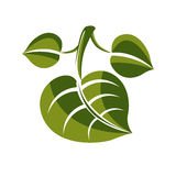 Simple green deciduous vector tree leaf, stylized nature element Stock Image