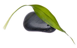 Simple Green Leaf with Black Stone Royalty Free Stock Photo