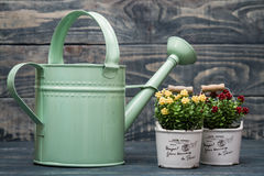 Simple Green Metallic Watering Can Stock Photos