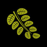 Simple green vector leaf of deciduous tree, stylized nature elem Royalty Free Stock Images