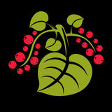 Simple green vector tree leaf with red seeds, stylized nature el Stock Images