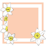 Simple greeting card with daffodil flowers. Minimalistic frame. Pink and yellow colors Royalty Free Stock Image