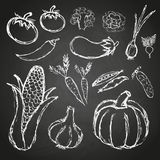 Simple hand drawn doodle vegetables on black board eps10 Royalty Free Stock Images