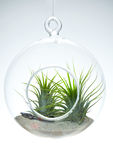 Hanging globe terrarium Royalty Free Stock Photography