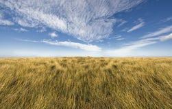 Simple horizon on a blue sky. Horizon on a blue sky. Grass/blue sky divide made for design work Stock Photos
