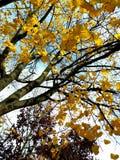 Simple joys of an autumn day stock image