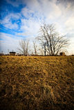 Simple landscape with detail of dry grass Royalty Free Stock Image