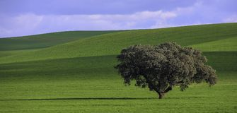 Peace and tranquility in nature. Simple landscape with a tree on a green field and a blue sky Stock Image