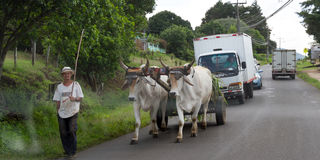 Simple life in Costa Rica. Heredia, Costa Rica- June 18: Local farmer with his ox cart going down a busy street. June 18 2016, Heredia, Costa Rica Royalty Free Stock Photography