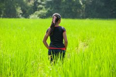 Simple life, Rear view of Laos girl in lao traditional clothing pass the paddy field in the morning. Rainy season. Ancient village stock image