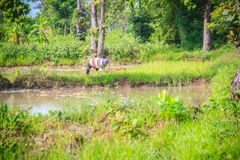 Simple lifestyle of rural Thai peasant, farmers are farming in t Stock Images