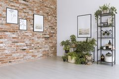 Simple living room with pictures. Plants under painting on white wall in simple living room with pictures on red brick wall stock photos