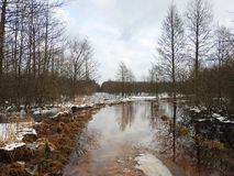 Simple road going in forest in winter, Lithuania Royalty Free Stock Images