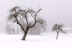 Simple, minimal winter landscape. In Slovenia Royalty Free Stock Photography
