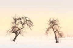 Simple, minimal winter landscape in Slovenia Royalty Free Stock Photo
