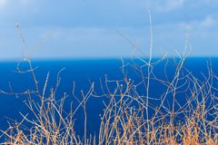 Bush branches against sky. Simple minimalist shot of bush branches against sky and blue sea water stock image