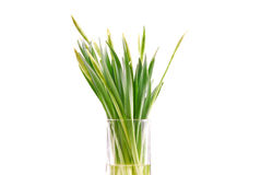 Simple Nature. Wild Flowers Growing in Glass Cup royalty free stock image