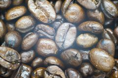 Photo of a fresh coffee beans stock images
