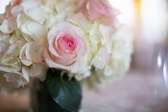 Simple Pink and White Rose Vase Stock Photos
