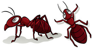 Simple red ants on white. Illustration royalty free illustration