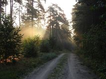 Beautiful sunrise in forest, Lithuania Royalty Free Stock Images