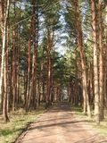 Simple road in forest, Lithuania Stock Photo