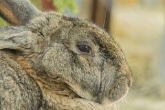 Simple sad rabbit Stock Image