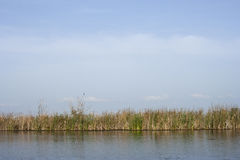 Simple scenery in Neajlov Delta Royalty Free Stock Photos