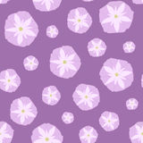 Simple Seamless Pattern with Pink Ipomoea Flowers. Royalty Free Stock Images