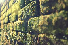 The Pattern of The Nature Royalty Free Stock Images