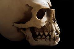Simple skull Stock Photos