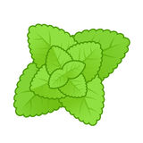 Simple style mint leaves illustration Royalty Free Stock Images