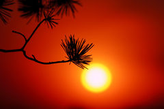 Simple Sunset in Beijing. Simple Sunset with a pine for foreground. Photo taken in Beijing in 2012 Stock Images