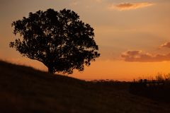 Simple sunset and tree on the hill at Observatory Hill royalty free stock photography