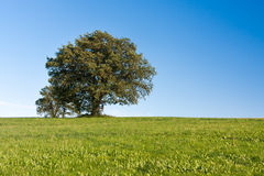 Simple Tree Royalty Free Stock Images
