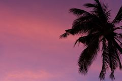 Pam tree and purple sunset. Royalty Free Stock Photo