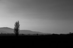 Simple view of a tree in the country, with some more distant tre. Es, hills and mist Stock Photo