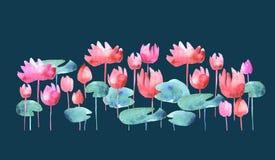 Simple water lotus blooming flowers Royalty Free Stock Images