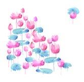 Simple water lotus blooming flowers. Stock Photo