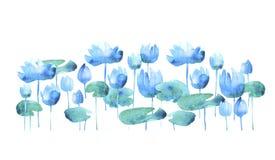 Simple water lotus blooming flowers. Royalty Free Stock Photo