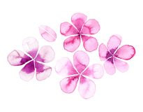 Simple watercolor  flowers Royalty Free Stock Images