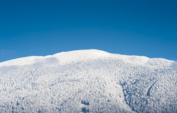 Simple white blue horizon. Simple horizon white forest in snow and blue sky Royalty Free Stock Image