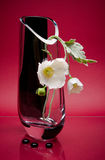 Simple white flower in original glass vase on pink Royalty Free Stock Photo