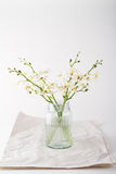Simple white orchids in a vintage glass jar with space for text Royalty Free Stock Images
