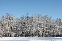 Simple winter scene Stock Photography